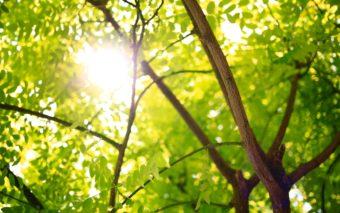 Puu ja aurinko.