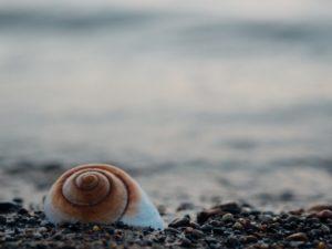 Simpukka meren rannalla.