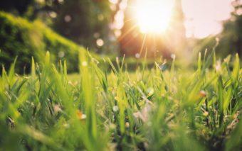 Aurinko ja nurmikko.