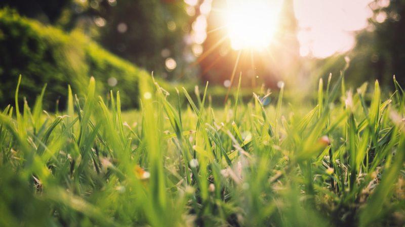 Aurinko ja nurmikko