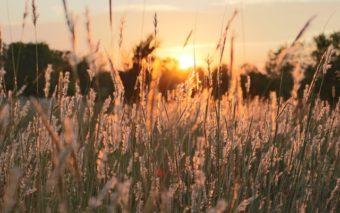 Heinät pellolla, taustalla näkyy aurinko.